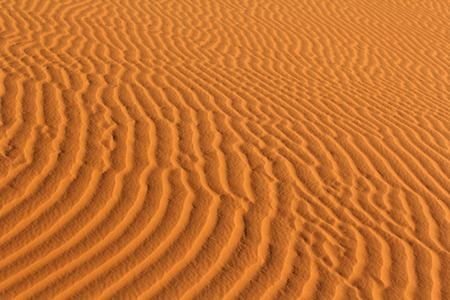 Sand ripples of dunes in the Sahara
