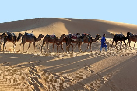 Camel caravan trekking in the Sahara desert 免版税图像