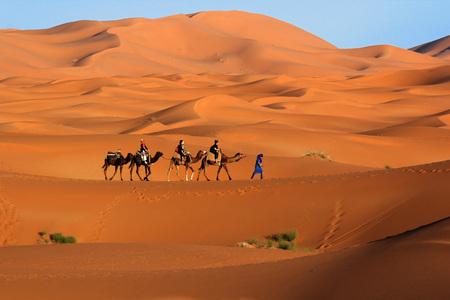 Camel caravan trekking in the Sahara desert 写真素材
