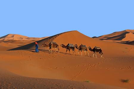 Camel caravan trekking in the Sahara desert at sunset