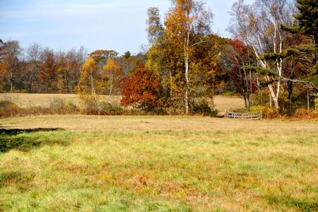 Fall scene with field and colorfull leaves