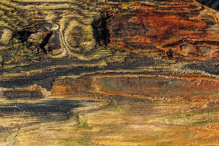 Driftwood colors and paterns in natural format shapes