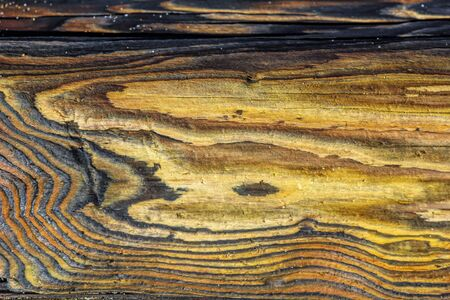Driftwood colors and paterns in natural format shapes with closeup look to use as backgrounds