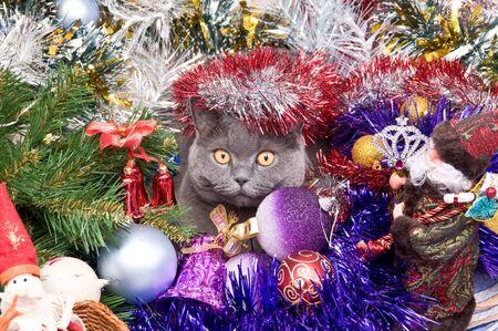 イギリスの猫のクリスマスのおもちゃと見掛け倒しであります。 写真素材