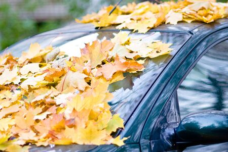 The car filled up by autumn maple foliage