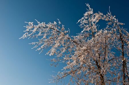 Ice-covered branches against the sky Stock Photo - 8556085