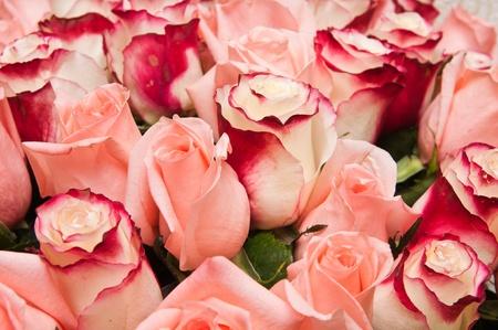 赤いバラの大きい花束