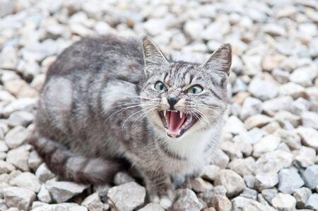 warns: wild predatory cat warns danger