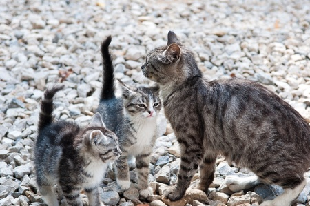 wild cat with a small kitten in the street