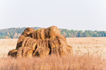 mown straw is composed of no field Stock Photo - 10848236