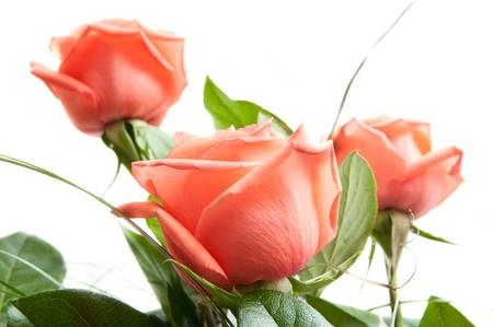 rosas rojas: un gran ramo de rosas rojas