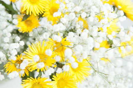 bouquet of yellow chrysanthemums on the background photo