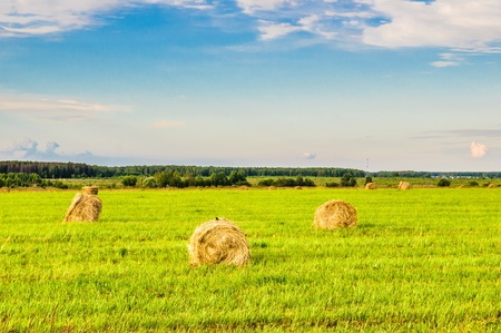 bales of straw on a sloping field photo