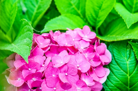 Beautiful bouquet of gentle colors Petunia  photo