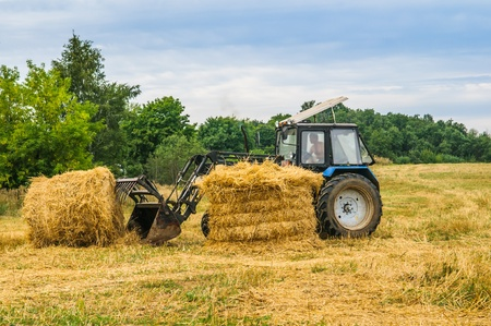 tractor removes the hay in the field