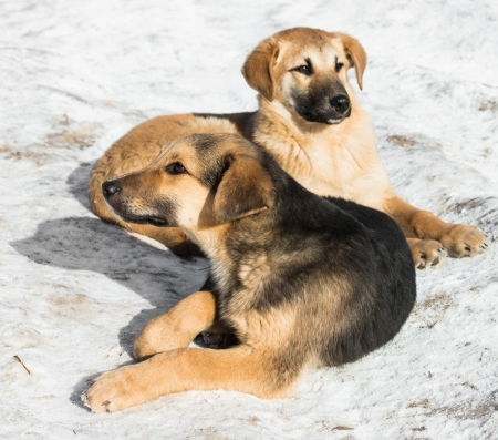 two little puppies are bred without the snow photo