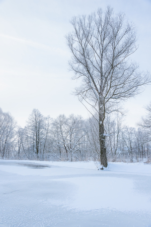 landscape is not still pond with snowy shore Stock Photo - 25215535