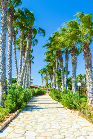 leading the way: palm tree alley way leading to the sea