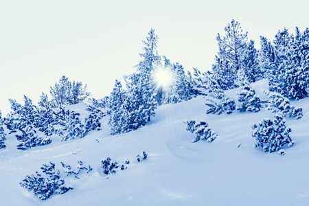 covered in snow: the rays of the sun rising on a hill covered with snow tree winter