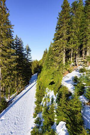 Paisagem rural estrada nevado encontra-se através da floresta abeto verde