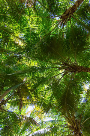 contrast floral: view of the top of a palm tree blue sky suns rays