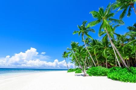 ヤシの緑の木と熱帯のビーチで海の楽園自然 写真素材