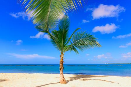 dominican: white-sand beach Dominican Republic Caribbean sun on blue sky Stock Photo