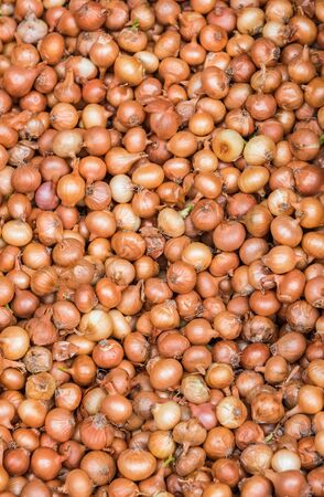 lot of small onions background of golden color