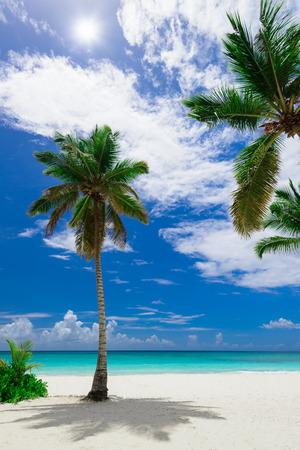 도미니카 공화국 카리브 해안 하얀 모래 해변 야자수 해변