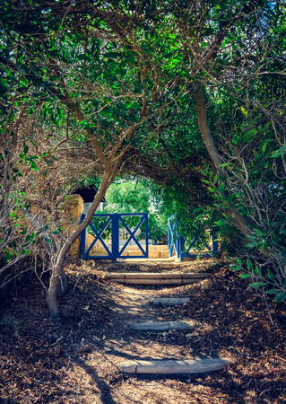 entrance through the trees alley arch to the back yard with colt