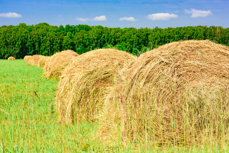 Round bales of hay in the field Stock Photo