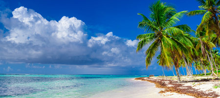 paradise of white sand beach of the Caribbean sea turquoise sea tree palm tree on the shore
