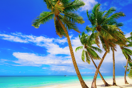 paradise beach beautiful white sand with palm tree on a blue sky background with white clouds resort on an island of the Caribbean sea of Dominican Republic 版權商用圖片