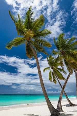 Beautiful tropical landscape of the Atlantic Ocean palm against the skyPalm Ocean Sky
