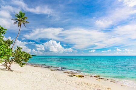 Magnifique paysage tropical du palmier de l'océan Atlantique contre le ciel Palm Ocean Sky