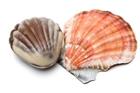 Chocolate and real seashell side by side isolated on white Stock Photo - 10842030