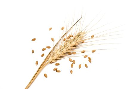 Wheat spike with seeds isolated on white photo