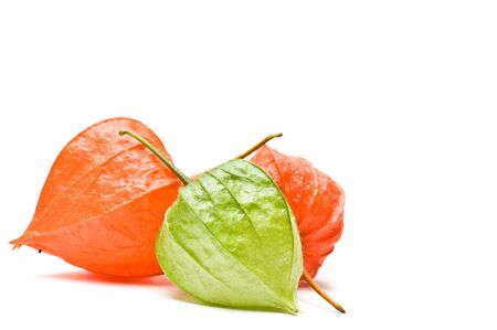 alkekengi: Frontal view of three physalis alkekengi isolated on white