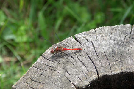 Dragonfly on on a log