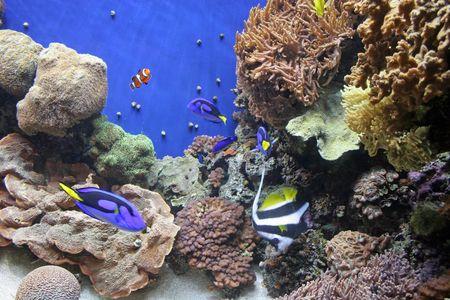 Fish in aquarium Stock Photo - 449801