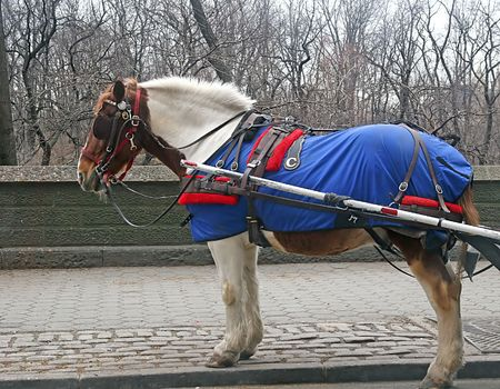 Carriage horse outside of a park in the snow photo