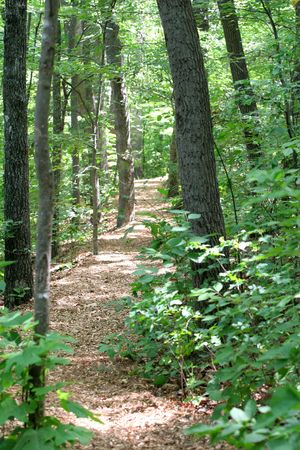 A peaceful scenic path through the woods photo