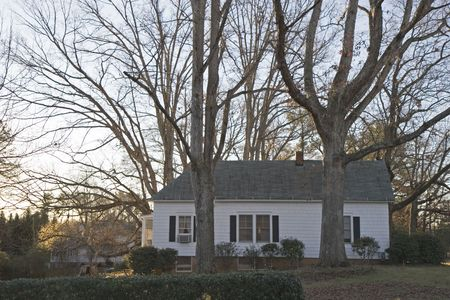 dawns: An old white siding farm house amid massive old oak trees in the dawns early light