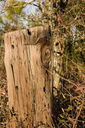 deteriorated: An old weathered stump or post long deteriorated