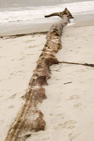 encroach: An old weathered log washed up on the beach