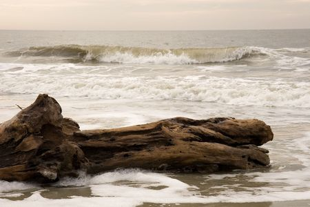 encroach: An old piece of log laying in the surf at the beach