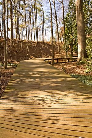A wooden plank walkway through the woods in a park Stock Photo
