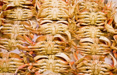 dungeness: Rows of fresh dungeness crabs on ice in a seafood market