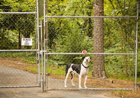 Beware of Dog sign on a fence and gate with a pit bull behind it photo