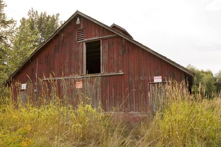 An old red barn overgrown with weeds